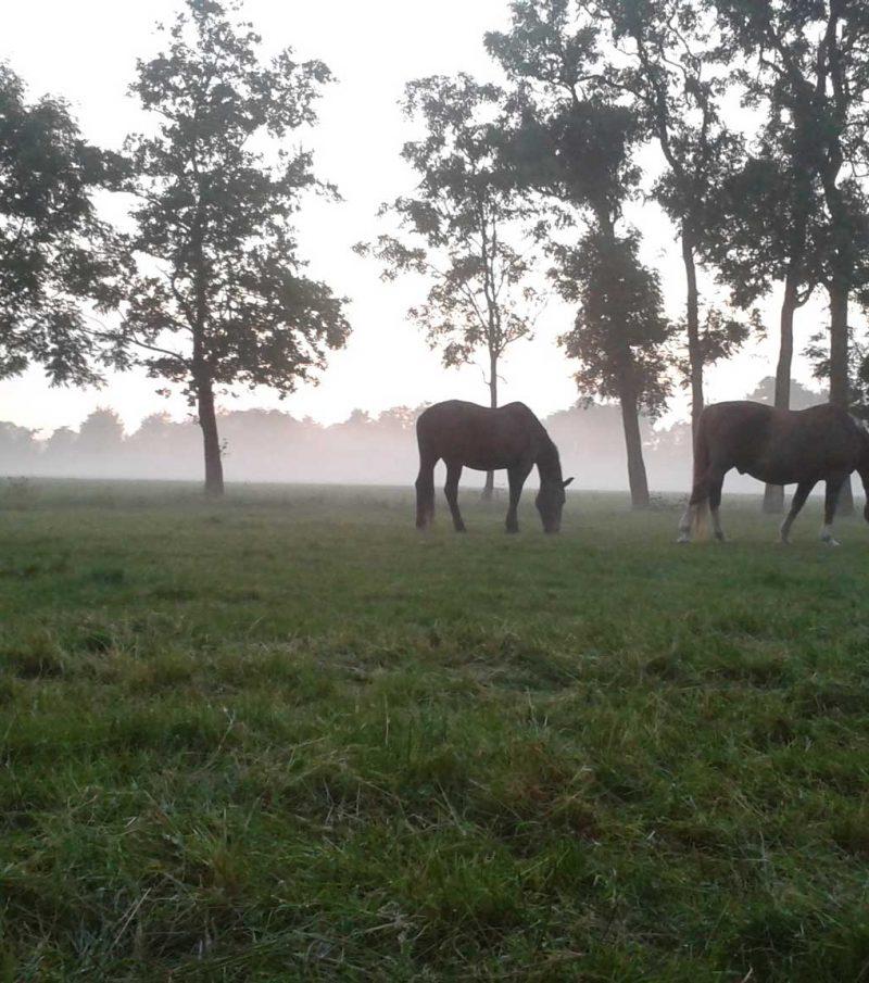 Paardenrusthuis_Tarieven_banner