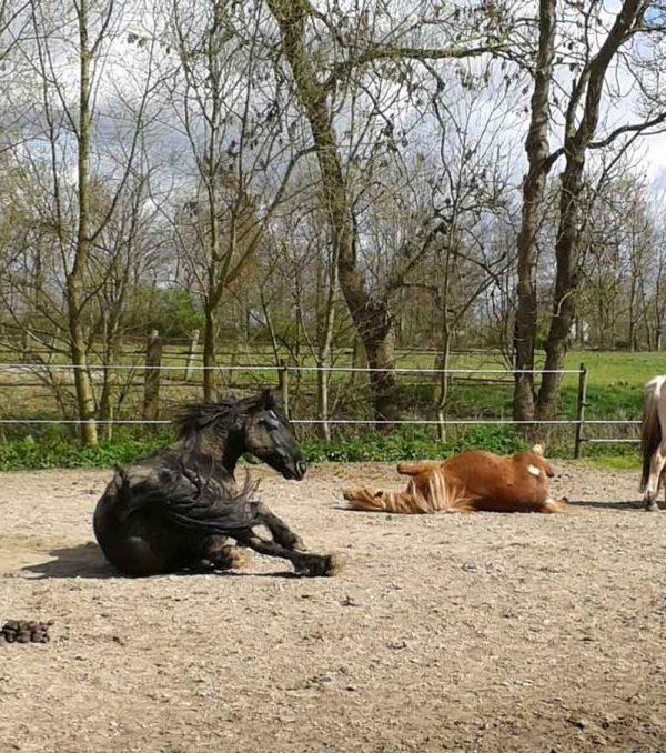 Paardenrusthuis_portfolio_paddock_1