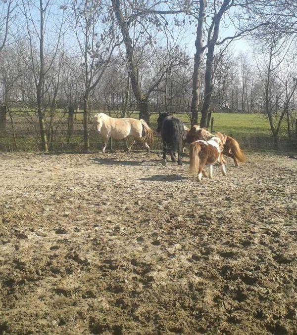 Paardenrusthuis_portfolio_paddock_2