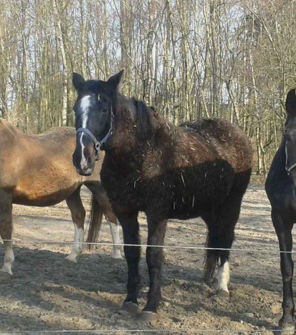 Paardenrusthuis_portfolio_paddock_3