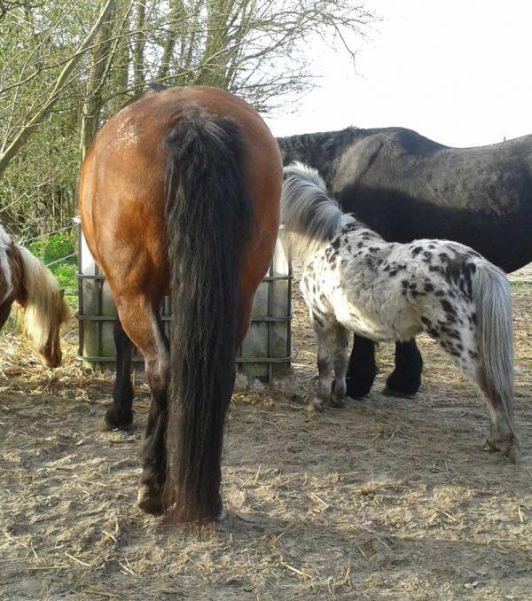 Paardenrusthuis_portfolio_paddock_4