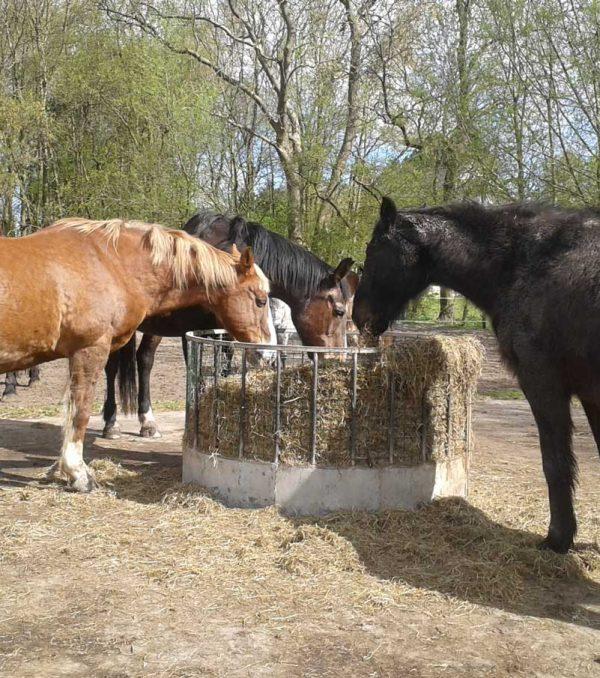 Paardenrusthuis_portfolio_paddock_5