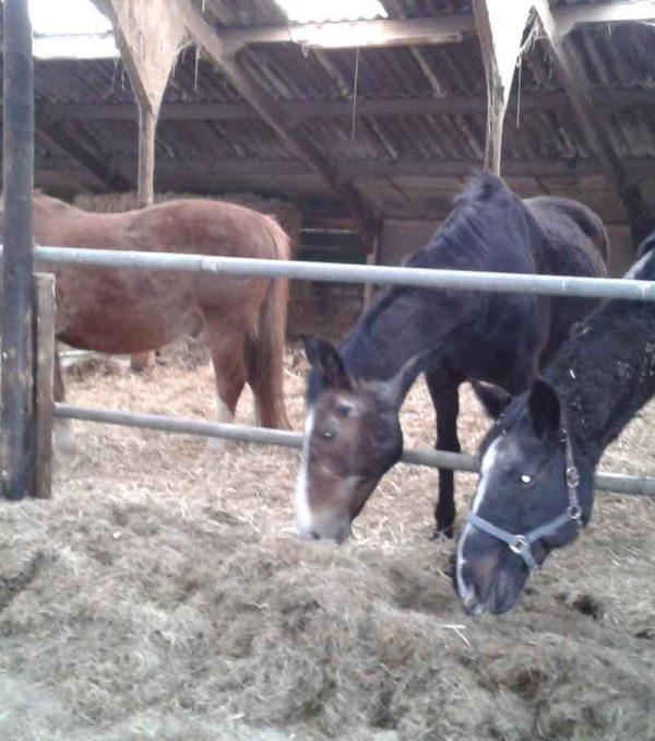 Paardenrusthuis_portfolio_stalling_1
