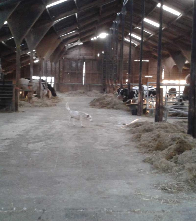 Paardenrusthuis_portfolio_stalling_2