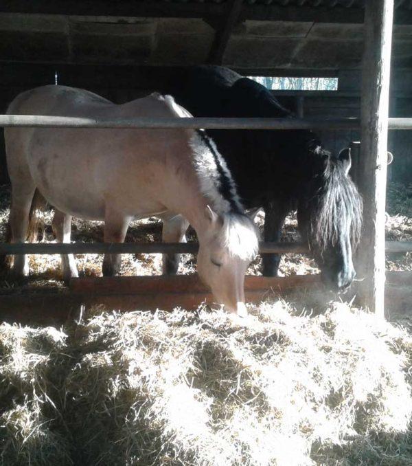 Paardenrusthuis_portfolio_stalling_3