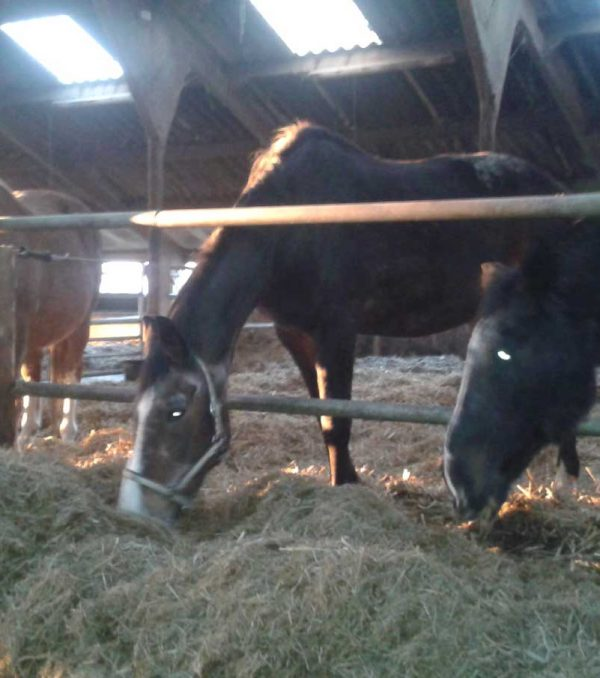 Paardenrusthuis_portfolio_stalling_4