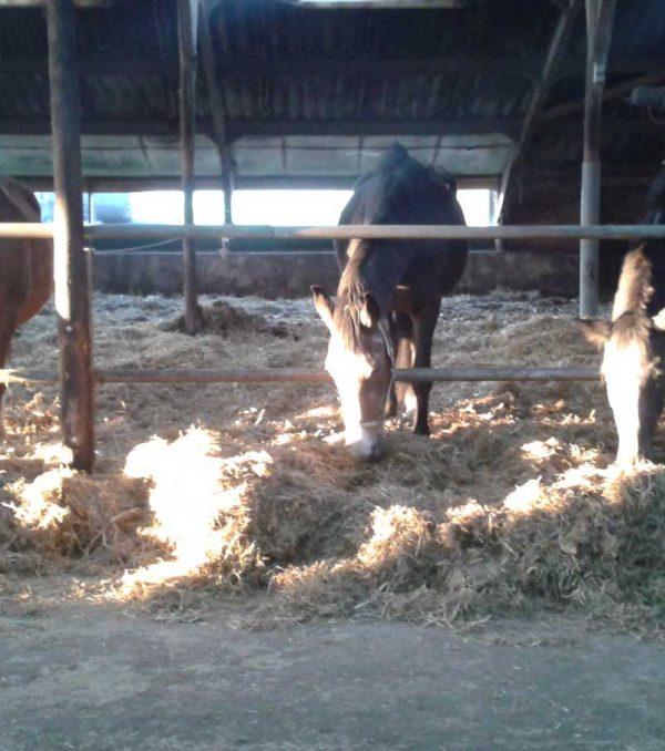 Paardenrusthuis_portfolio_stalling_7