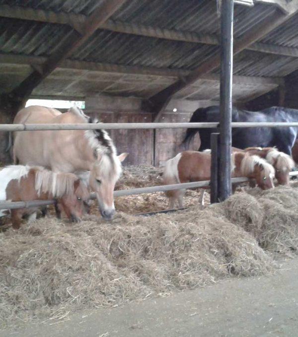 Paardenrusthuis_portfolio_stalling_8