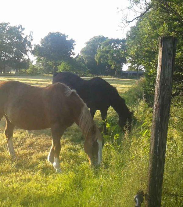 Paardenrusthuis_portfolio_weide_2