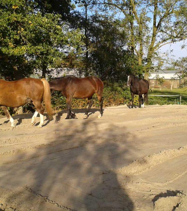 Paardenrusthuis_portfolio_weide_4