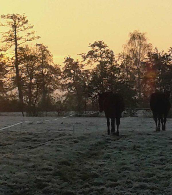 Paardenrusthuis_portfolio_weide_5