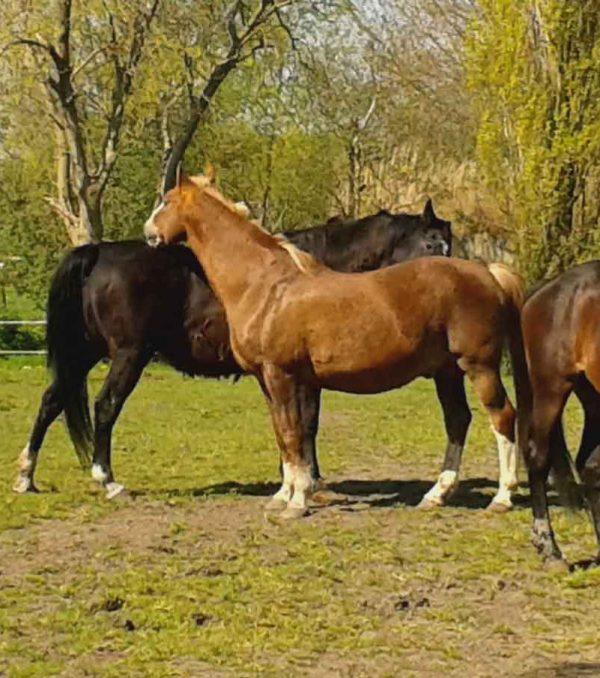 Paardenrusthuis_portfolio_weide_6