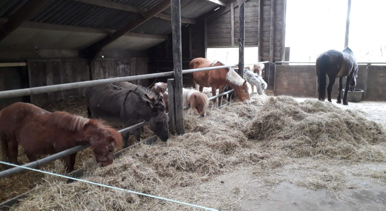 Paarden stalling